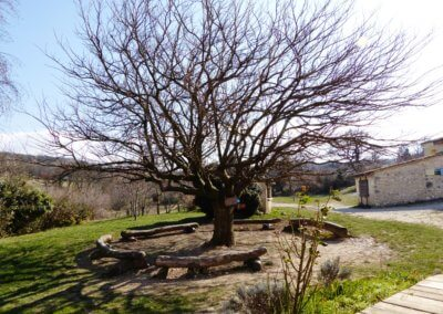 09 Le murier platane des Amanins en mode hivernal